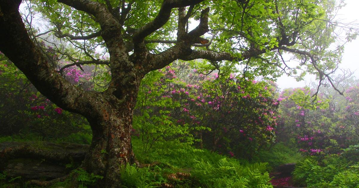 Adventures Of Scjack 2012 06 01 Craggy Gardens