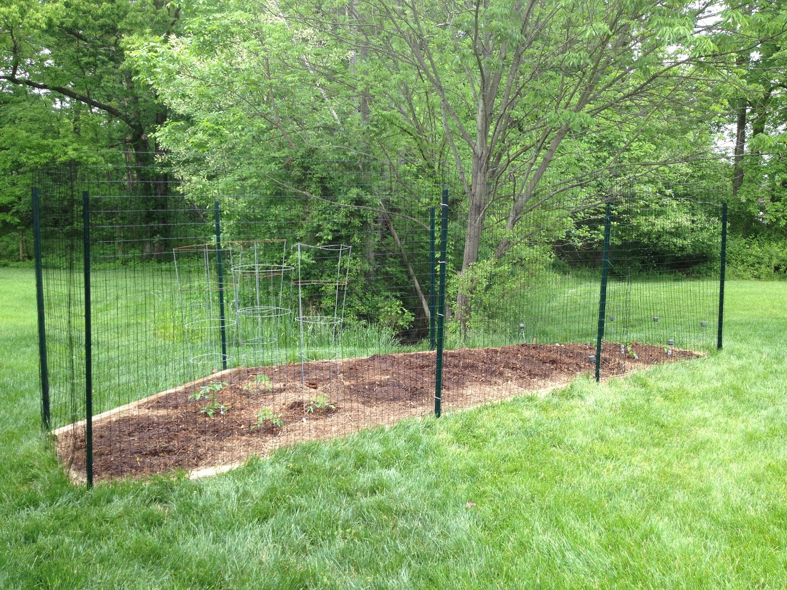 How do i keep deer out of my garden - Seriously If You Are Having Trouble With Deer Quit Trying To Find The Inexpensive Solution And Just Invest In Tall Posts And Wire Fencing