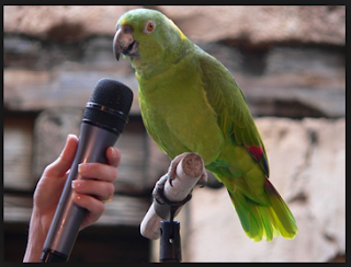 How to Educate a Parrot to Talk
