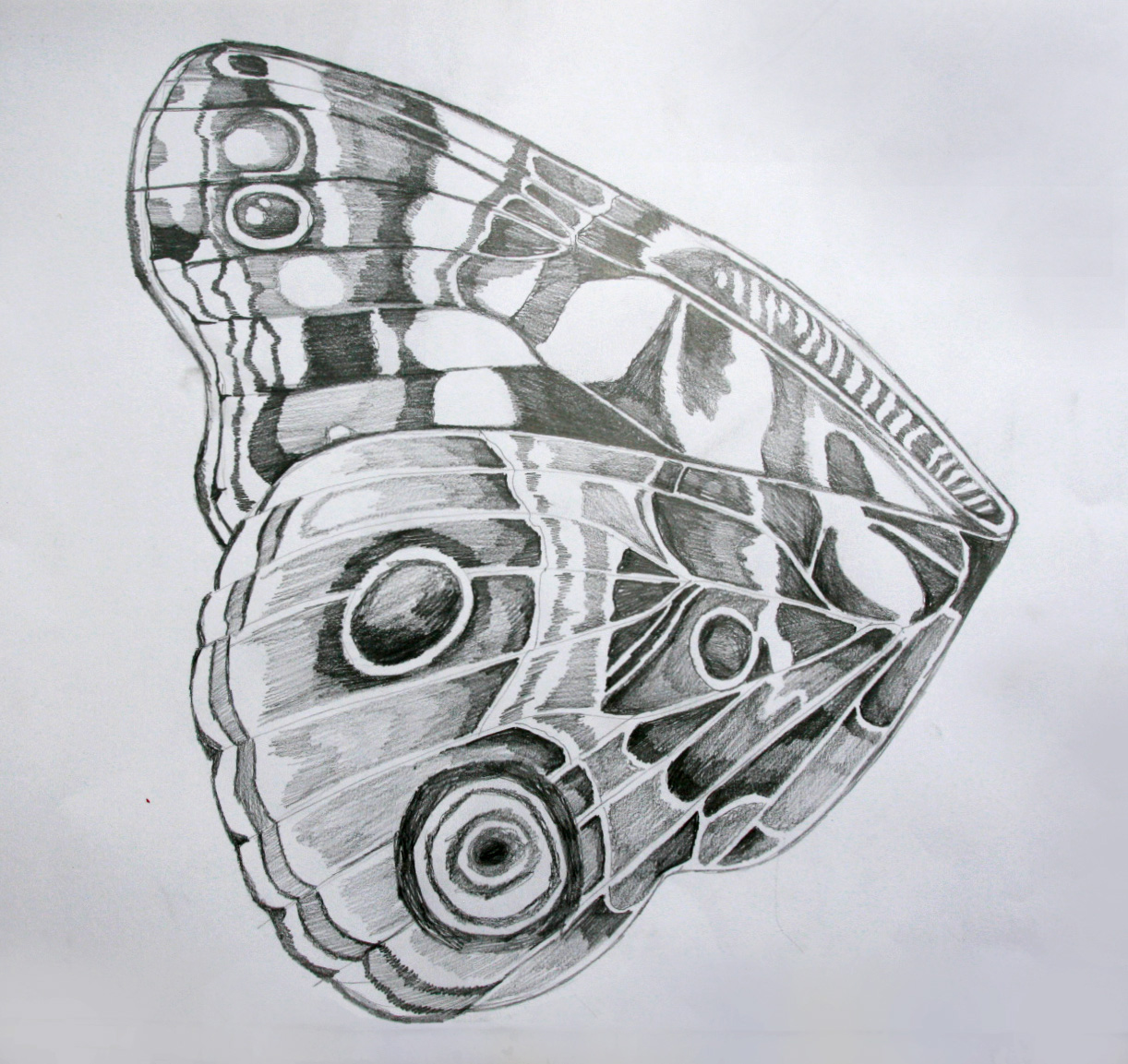 Pavla Richterova Motyli Kridla