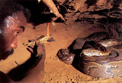 Pictures of an African  Python