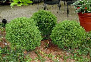 831 further Platia Garden Fountain p 446 also N 5yc1vZbste also 360 Unique Garden Decor Ideas in addition Custom Garden Designs. on garden designs for medium gardens