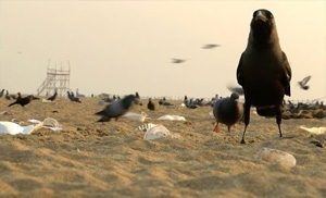 Chennai Marina Beach – After Math Of Kaanum Pongal