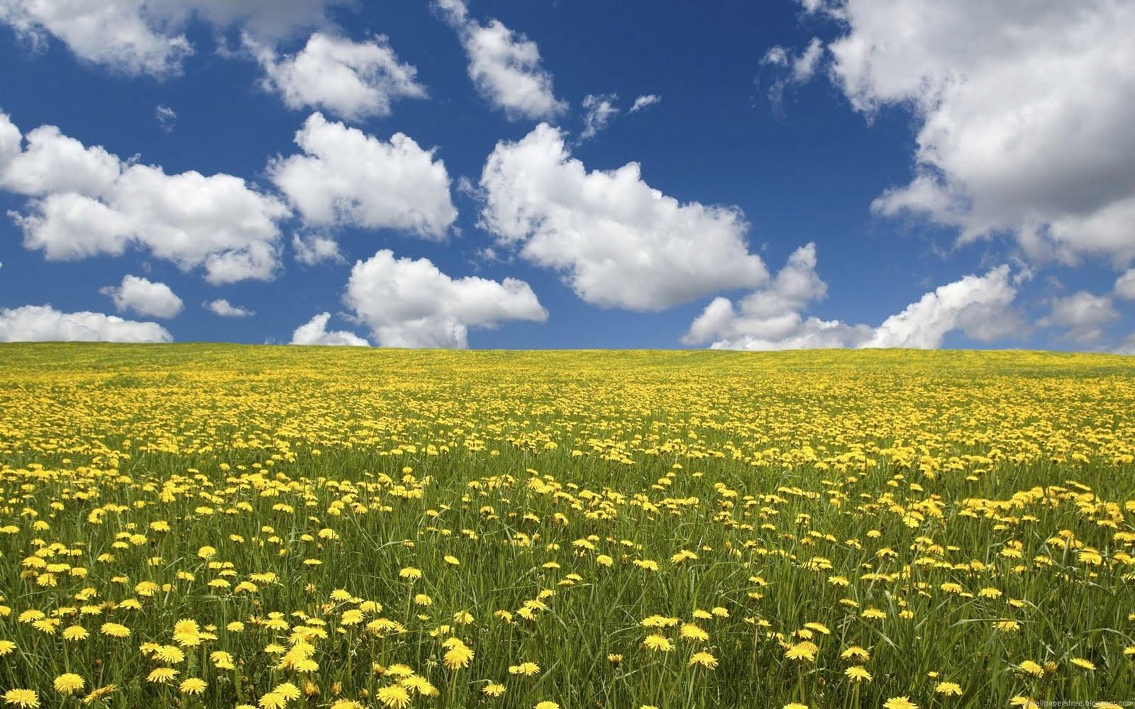 http://4.bp.blogspot.com/-CKffDxpn4D8/TXu8x4Db3lI/AAAAAAAAS9g/9s2wWhIVnxw/s1600/Field-of-Flowers-Nature-Wallpaper.jpg