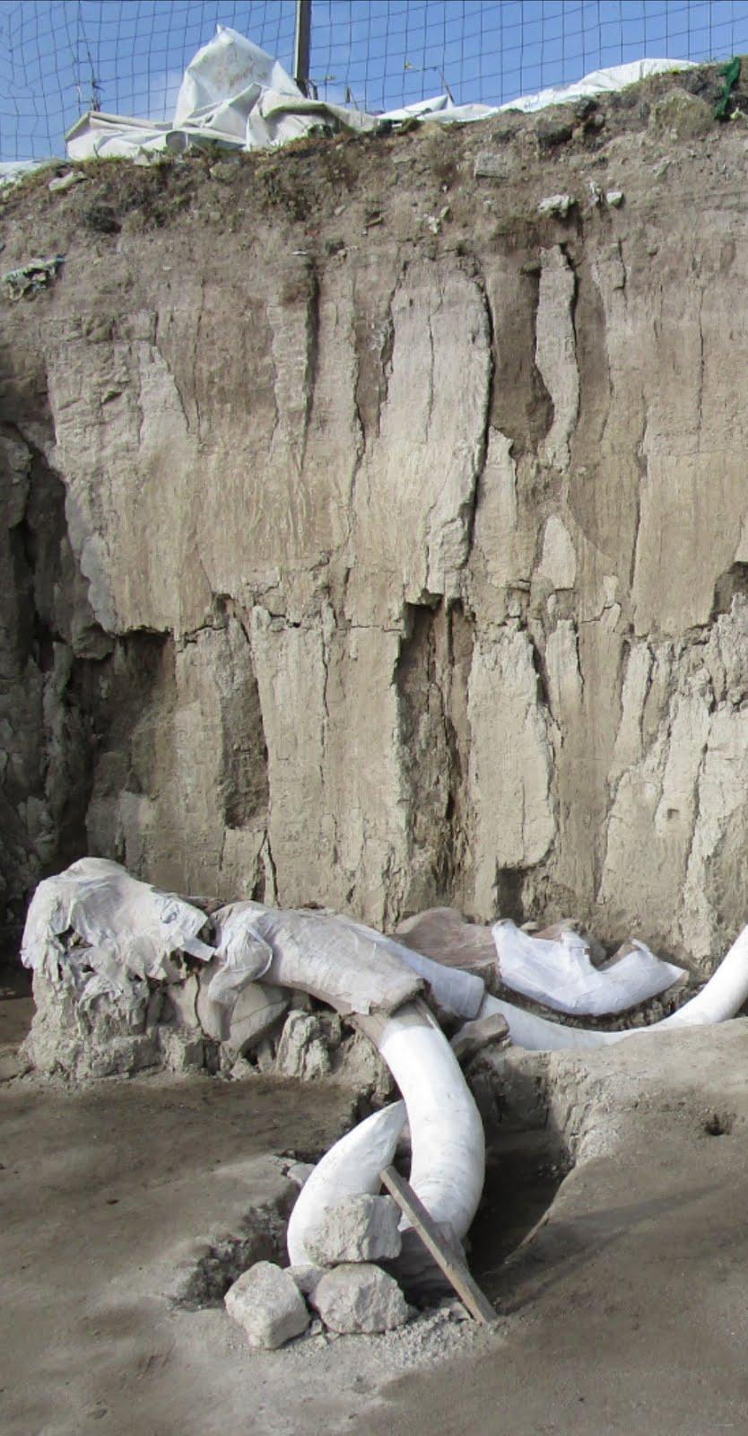 Descubren en Tultepec contexto inédito de cacería y destazamiento de mamut