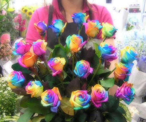 17 'قوس قزح' من أجمل الزهور التي قد تراها   حقن الزهور بصبغات مختلفة