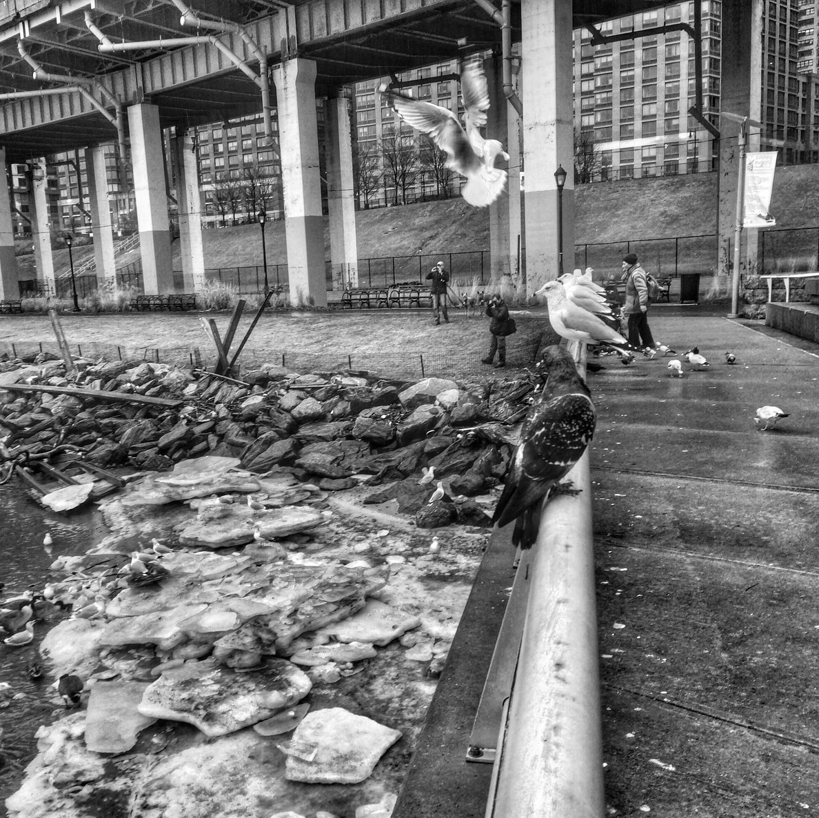 Feed the Birds, #riversidepark #birds  #seagulls #pigeons NYC 2013