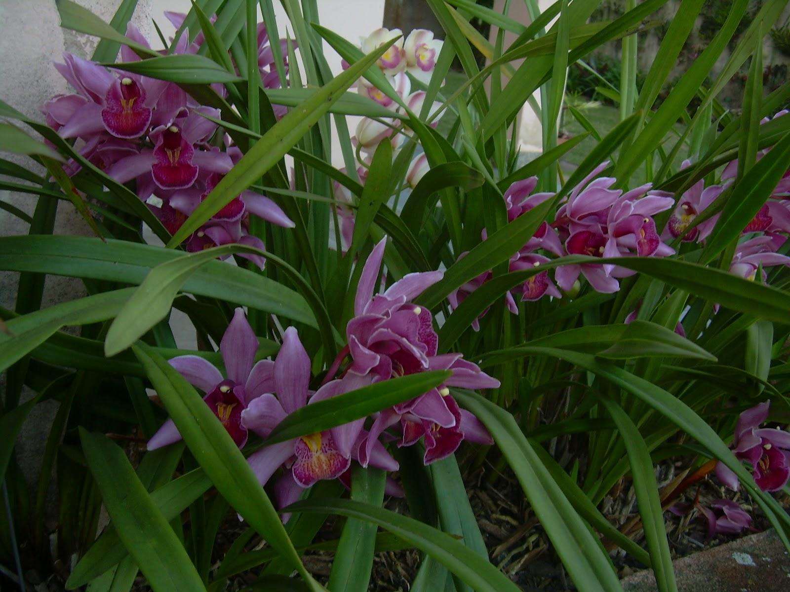 fotos de jardim tropical : fotos de jardim tropical:Veja mais fotos de jardins tropicais em: http://www.mariaidasaudade