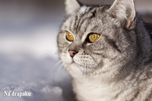 Problemy z żołądkiem u kotów