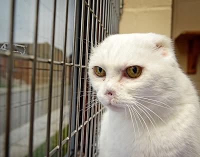 Gato com a aparência de Lord Voldemort pode encontrar um lar em breve | Ordem da Fênix Brasileira