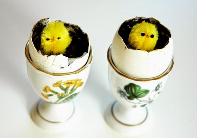 Äggkoppar med äggskal som fyllts med jord, frön och konstgjorda kycklingar.