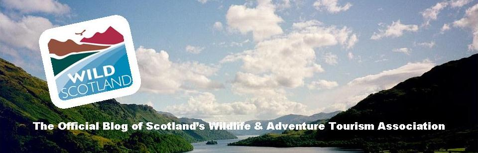Wild Scotland: blog of the Scottish wildlife & adventure tourism association