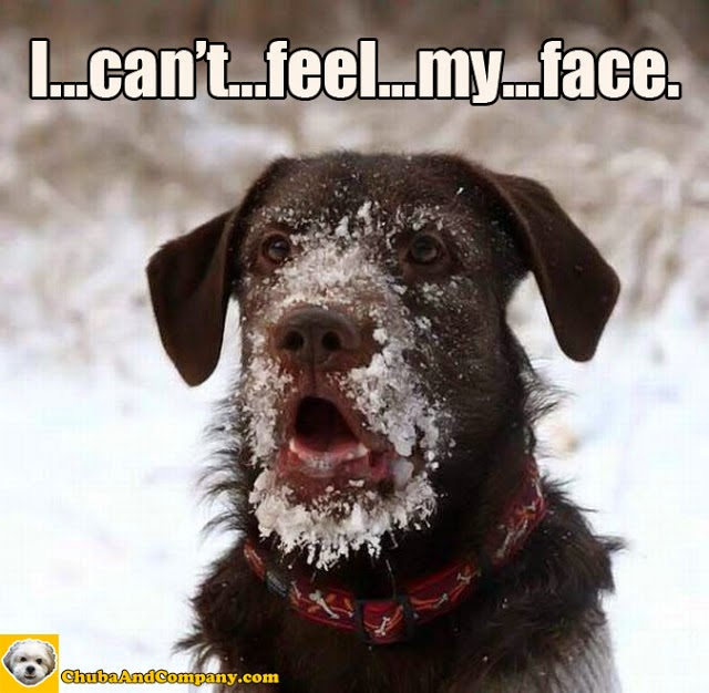 Images of funny faces with quotes