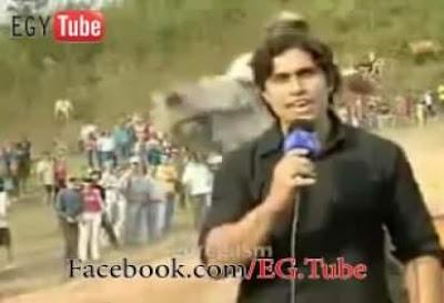 بالفيديو مشهد رهيب جدا ..حصان يقتل مذيع أثناء التصوير على الهواء !!!!