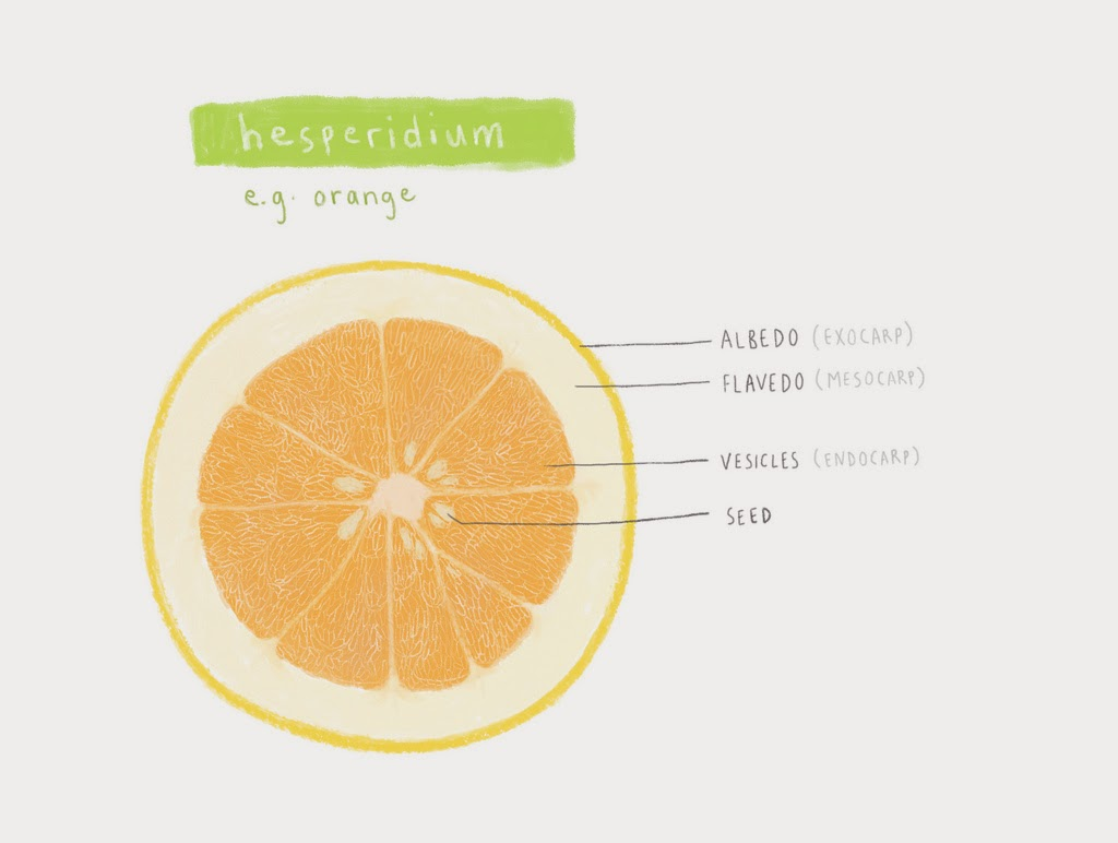 Home Remedy For Cough Steamed Orange The Yummy Journey