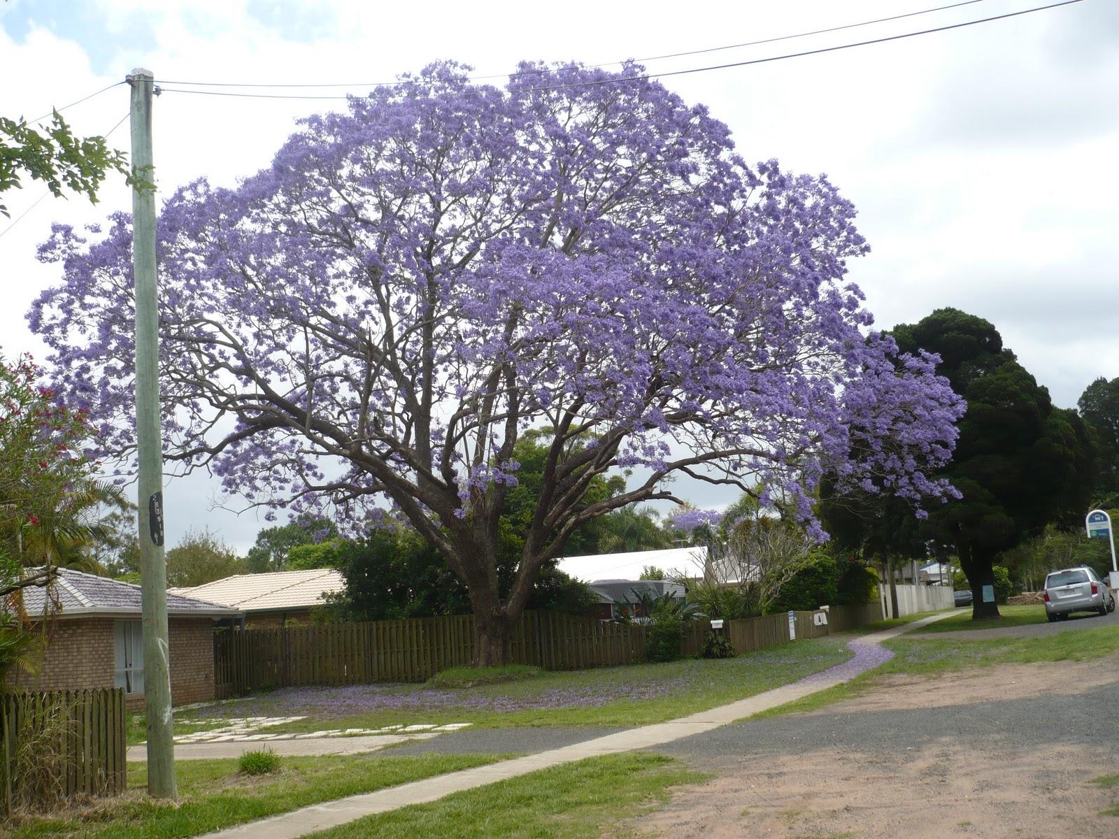 Epoch date in Brisbane