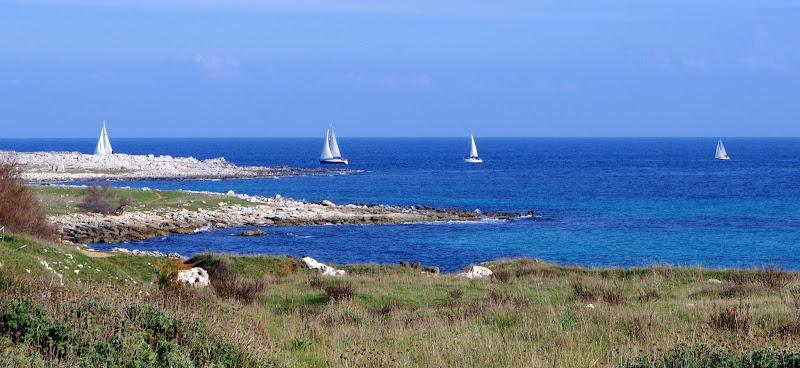 Segler im Winter bei Otranto (Apulien)