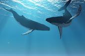Sonidos y Cantos de Ballenas