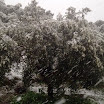 Δηλώσεις ζημιάς για παγετό και ανεμοθύελλα στο δήμο Ευρώτα