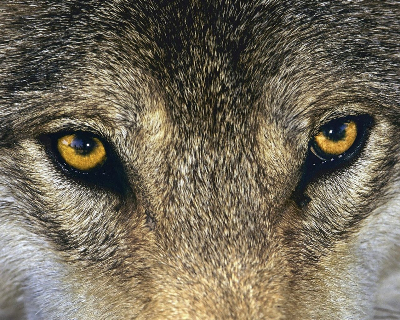 Rosa Rubicondior How Wolves Evolved Into Dogs Loop Ramadhan Counter Strike Global Offensive