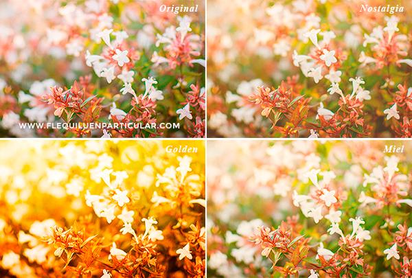 set acciones photoshop otoño