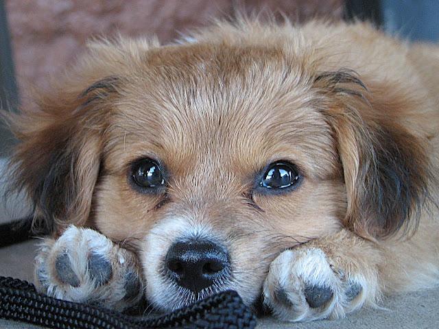 cute pics of puppies