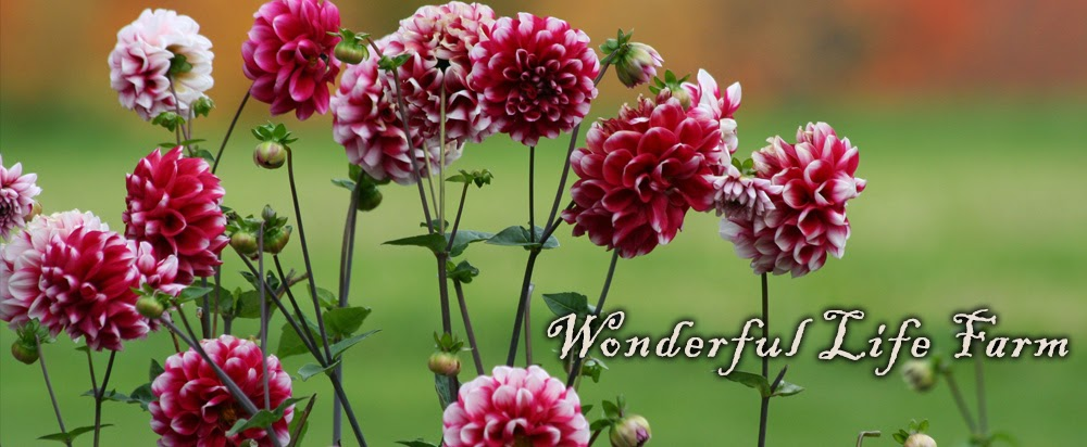 Wonderful Life Farm