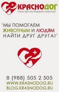 Давайте поможем приюту в Краснодаре
