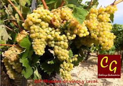 20ª Muestra de vinos y cavas