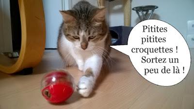 Chatte et balle de croquettes rouges.