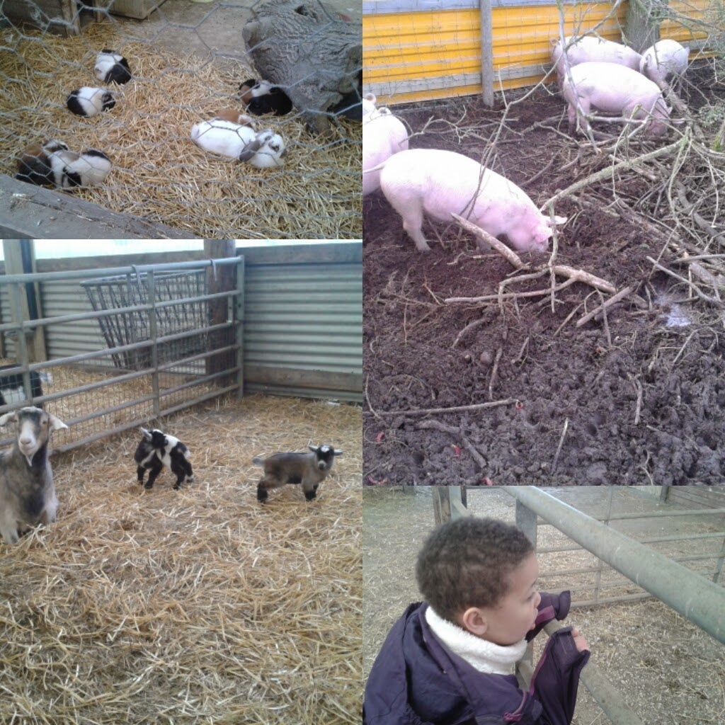 Rabbits, pigs, madam taking it all in and the goats with their kids.