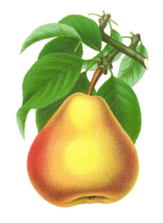 stock pear image