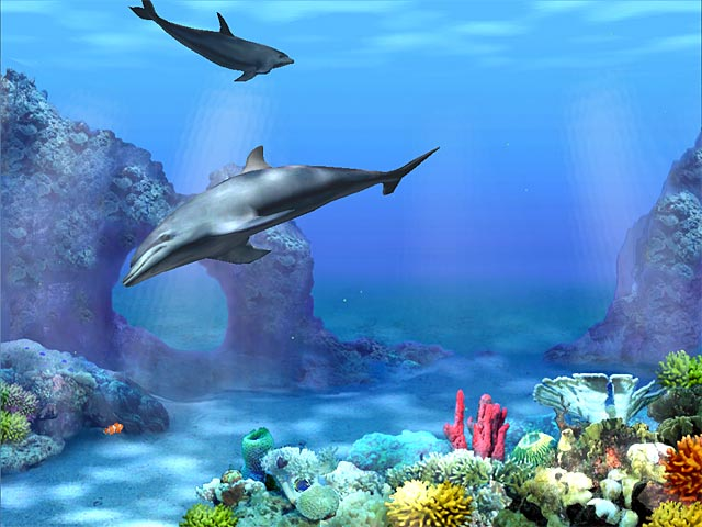 free live dolphin wallpaper for android