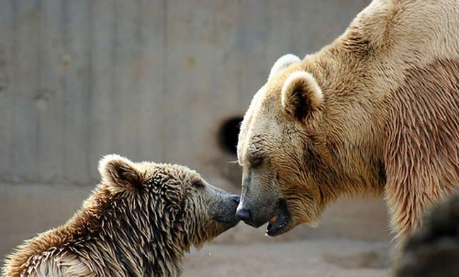 HD Animals Wallpapers: Mothers Love - Animals love ...