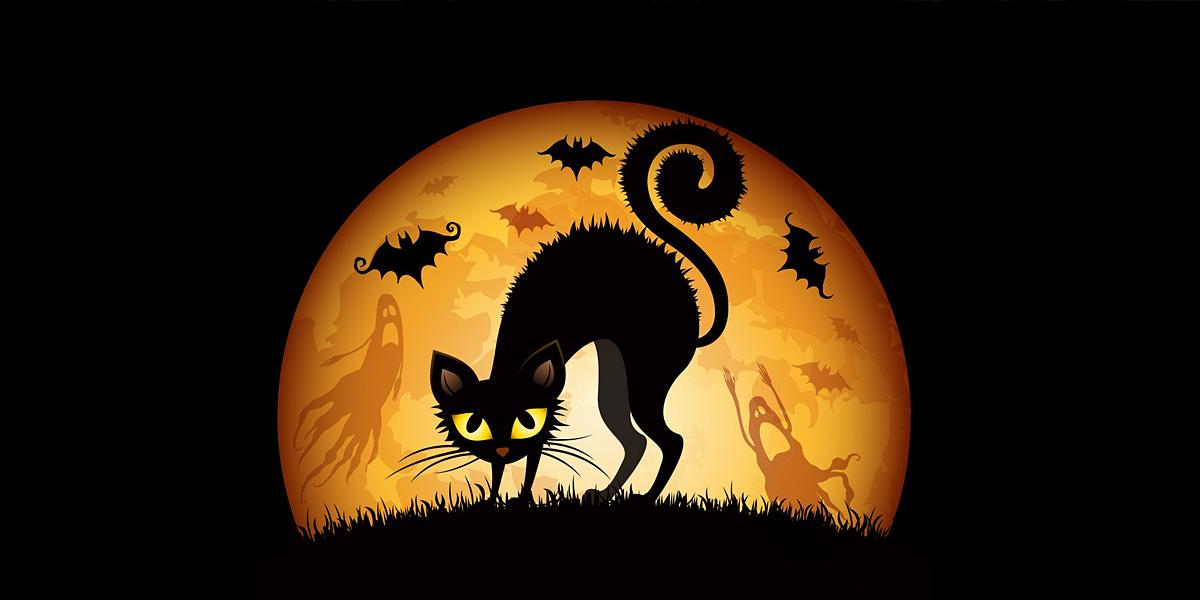 Cats Halloween l 300+ Muhteşem HD Twitter Kapak Fotoğrafları
