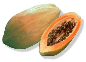 buah pepaya papaya pepaya mengandung vitamin c dan provitamin a