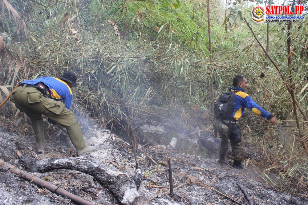 Kebakaran Lahan Hutan Bandar Negeri Suoh