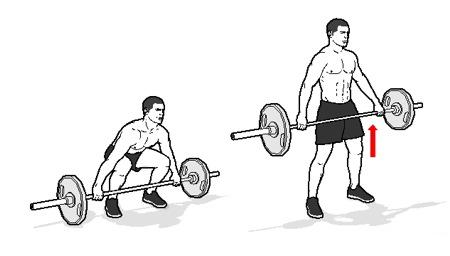 Cara Membentuk Otot Sayap