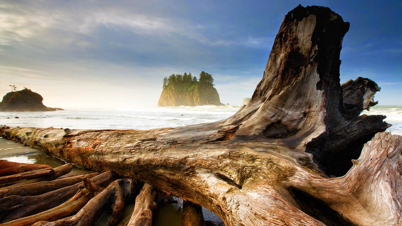 Second Beach, near Olympic National Park and La Push, Washington (© Ian Shive/Tandem) 258