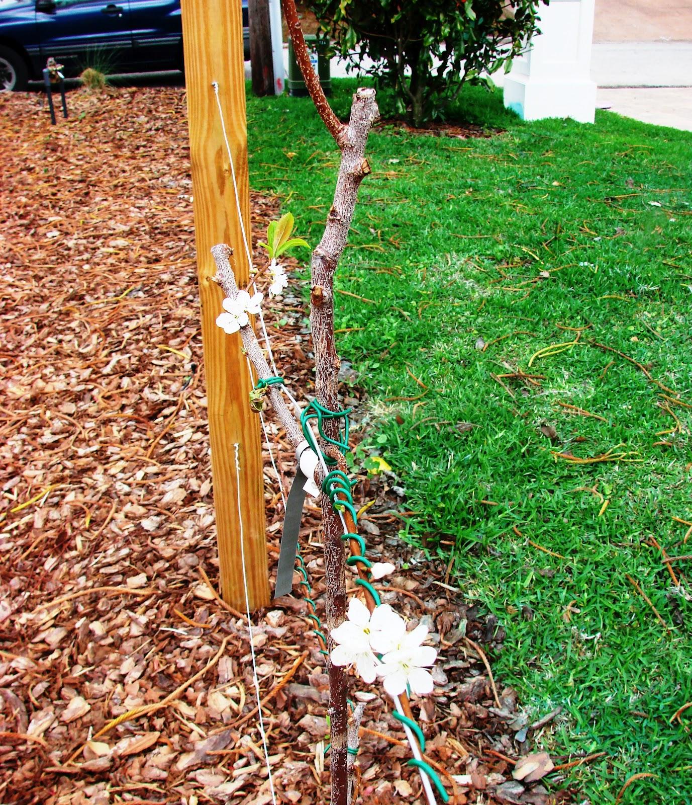 earth shattering gardening june 2012