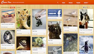 Pinterest dedicato agli animali
