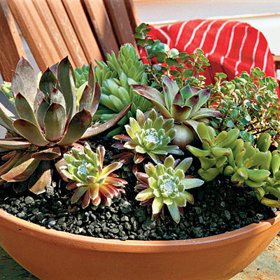 Site Blogspot  Tips  Gardening on The Everyday Home  Container Gardening
