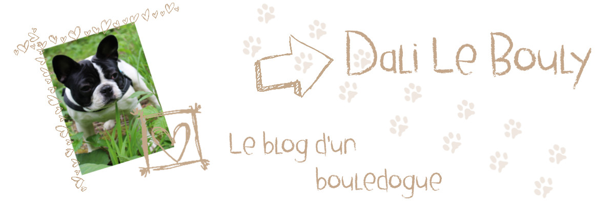 Dali Le Bouly, le blog d'un bouledogue