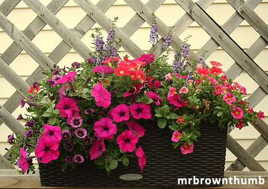 self-watering window box planter subirrigation planter