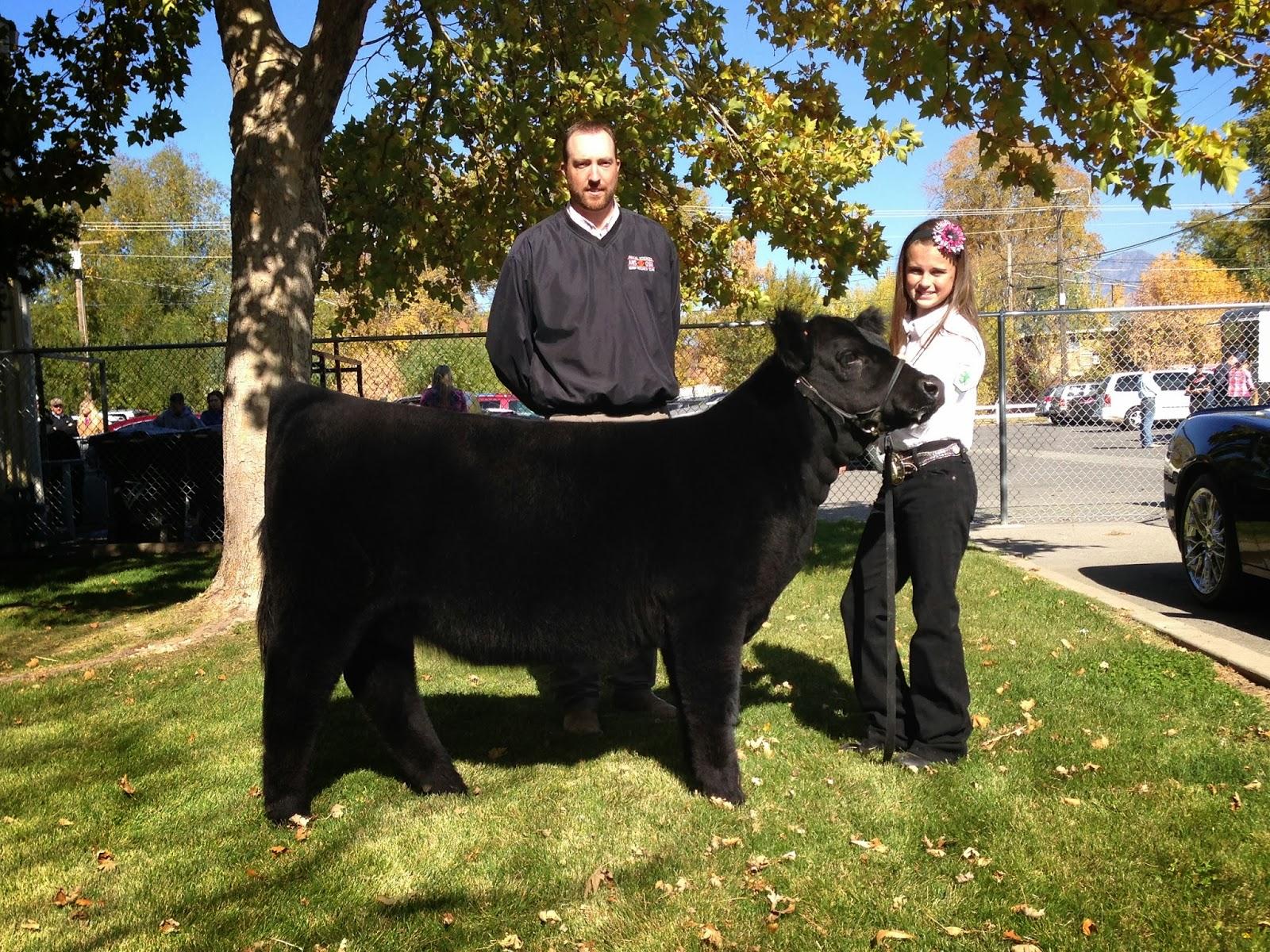 2013 Reserve Champion Heifer