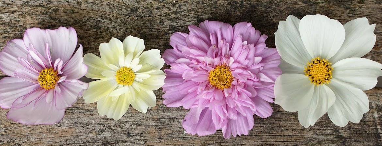 Fra frø til blomst