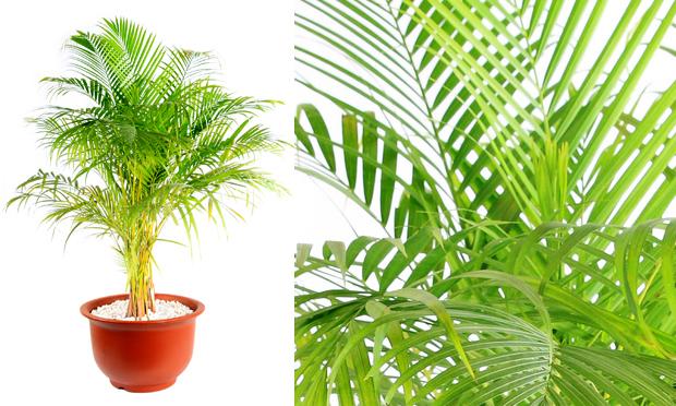 Cura Plantas de Interiores e seus Efeitos Terapêuticos