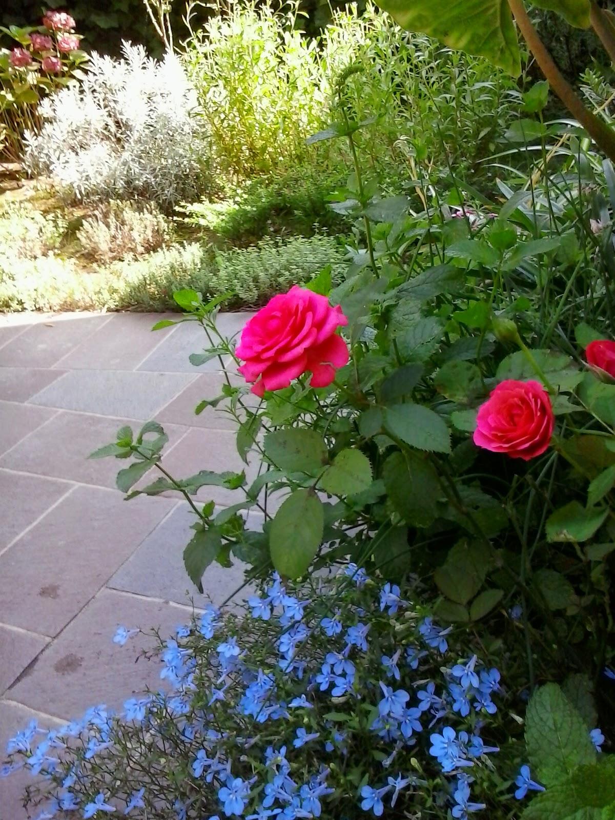 rose e campanelline