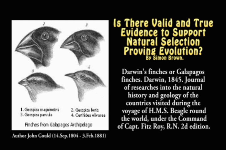 Is There Valid and True Evidence to Support Natural Selection Proving Evolution? By Simon Brown.