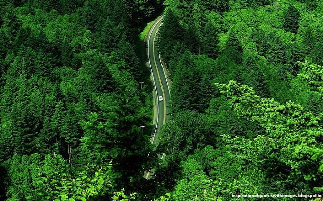 Road trees wallpaper